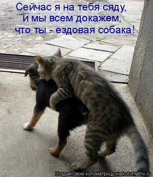 Котоматрица: Сейчас я на тебя сяду,  и мы всем докажем,  что ты - ездовая собака!