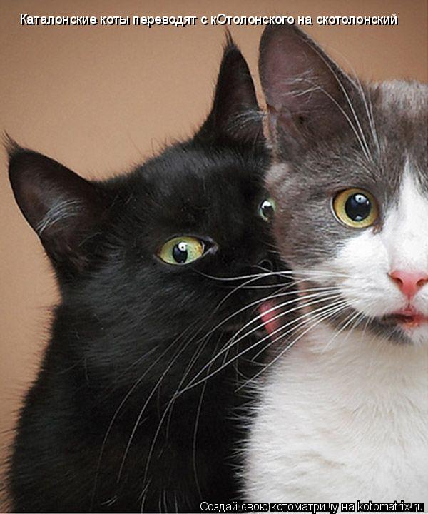 Котоматрица: Каталонские коты переводят с кОтолонского на скотолонский