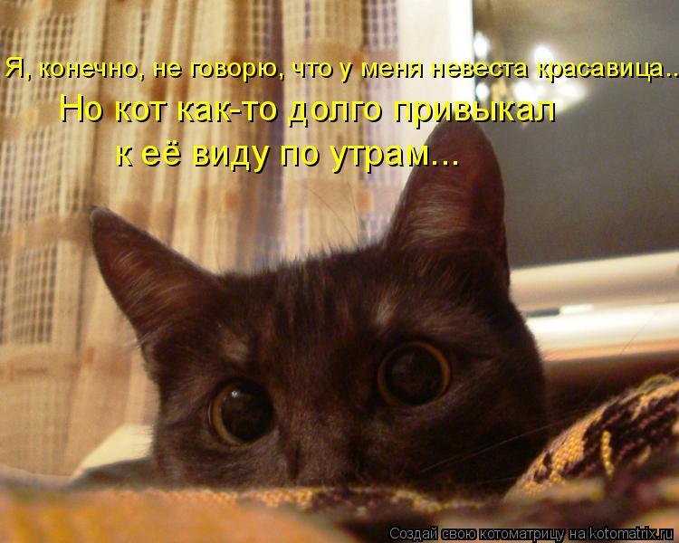 Котоматрица: Я, конечно, не говорю, что у меня невеста красавица... Но кот как-то долго привыкал к её виду по утрам...