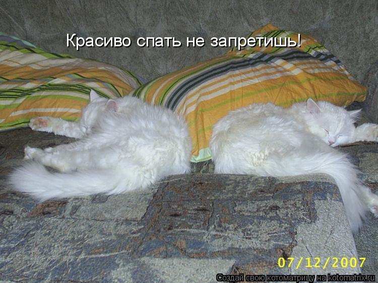 Котоматрица: Красиво спать не запретишь!
