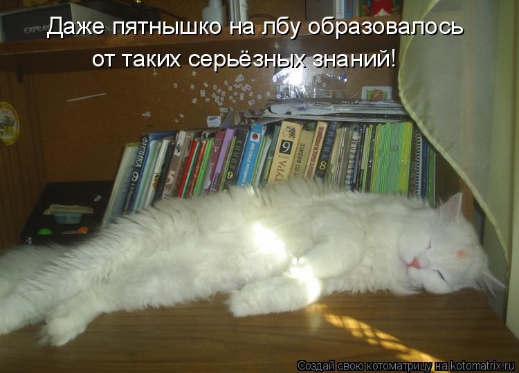 Котоматрица: Даже пятнышко на лбу образовалось от таких серьёзных знаний!