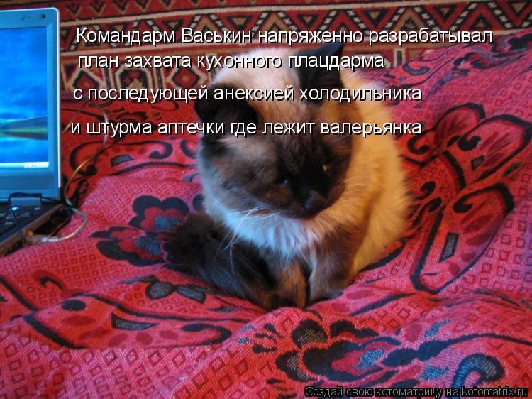 Котоматрица: Командарм Васькин напряженно разрабатывал план захвата кухонного плацдарма с последующей анексией холодильника и штурма аптечки где леж