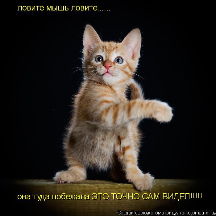 Котоматрица: ловите мышь ловите...... она туда побежала ЭТО ТОЧНО САМ ВИДЕЛ!!!!!