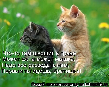 Котоматрица: Что-то там шуршит в траве, Может еж, а может мышка, Надо все разведать нам, Первый ты идешь, братишка!