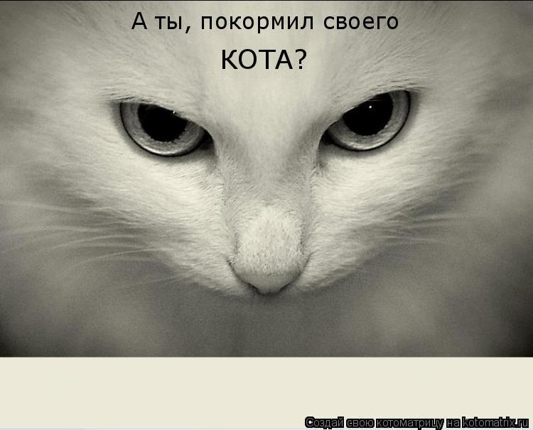 Котоматрица: А ты, покормил своего  КОТА?
