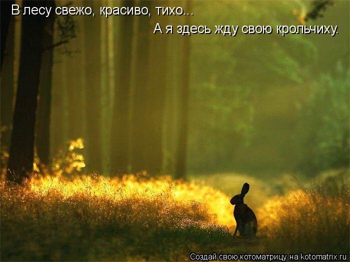 Котоматрица: В лесу свежо, красиво, тихо... А я здесь жду свою крольчиху.
