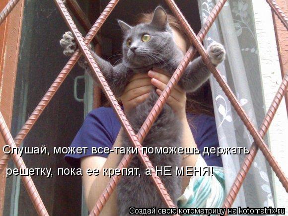Котоматрица: Слушай, может все-таки поможешь держать  решетку, пока ее крепят, а НЕ МЕНЯ!