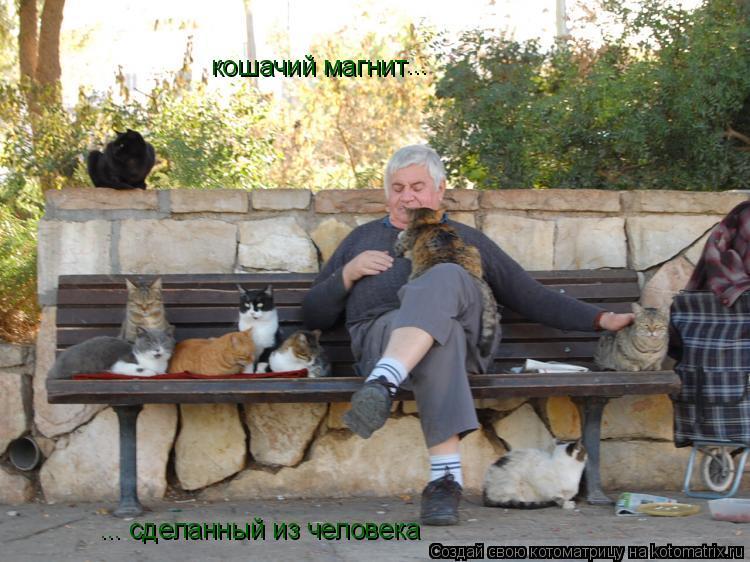Котоматрица: кошачий магнит ... ... сделанный из человека