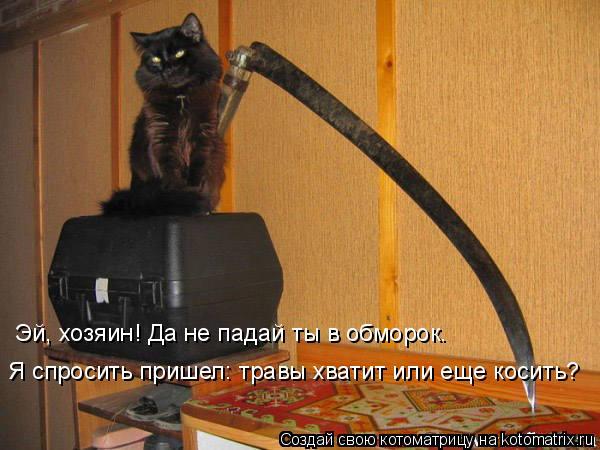 Котоматрица: Эй, хозяин! Да не падай ты в обморок. Я спросить пришел: травы хватит или еще косить?