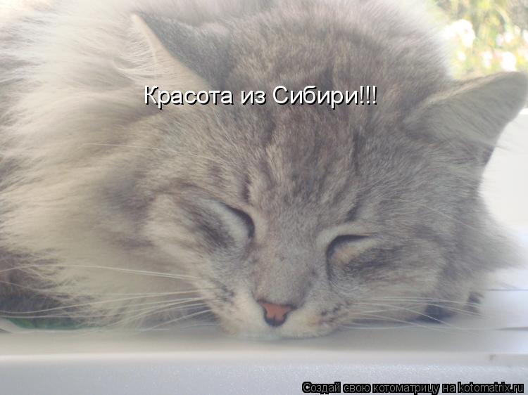 Котоматрица: Красота из Сибири!!!