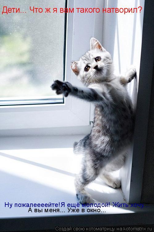 Котоматрица: Дети... Что ж я вам такого натворил? Ну пожалеееейте!Я ещё молодой! Жить хочу... А вы меня... Уже в окно...