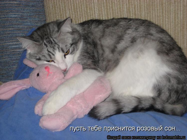 Котоматрица: пусть тебе приснится розовый сон...