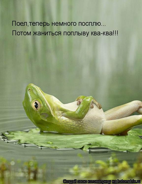 Котоматрица: Поел,теперь немного посплю... Потом жаниться поплыву ква-ква!!!