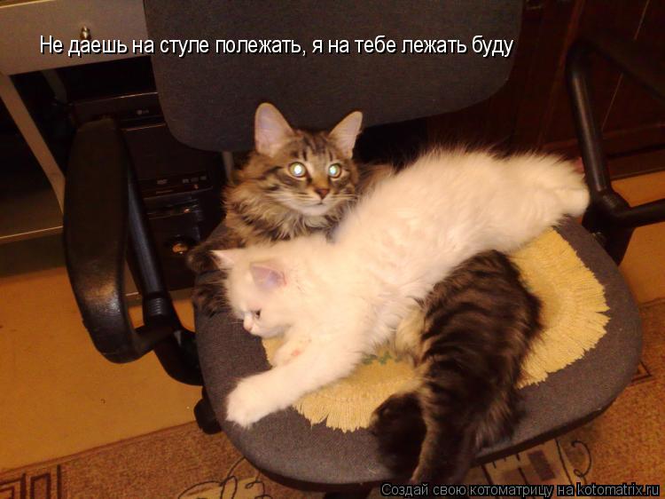 Котоматрица: Не даешь на стуле полежать, я на тебе лежать буду