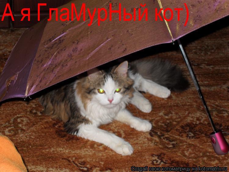 Котоматрица: А я ГлаМурНый кот)