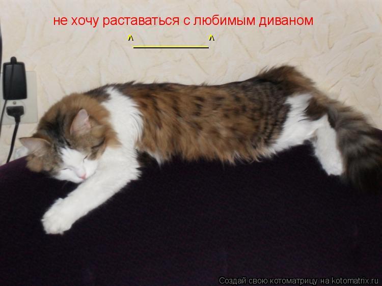 Котоматрица: не хочу раставаться с любимым диваном ^__________^