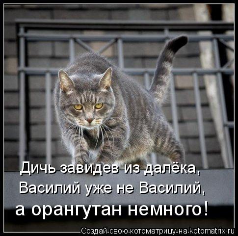 Котоматрица: Дичь завидев из далёка, Василий уже не Василий, а орангутан немного!