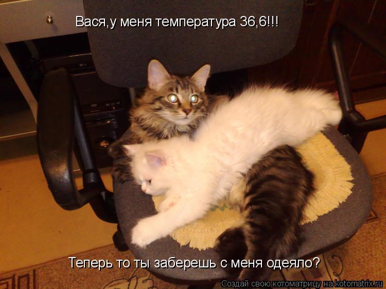 Котоматрица: Вася,у меня температура 36,6!!! Теперь то ты заберешь с меня одеяло?