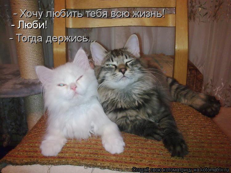 Котоматрица: - Хочу любить тебя всю жизнь! - Люби! - Тогда держись...