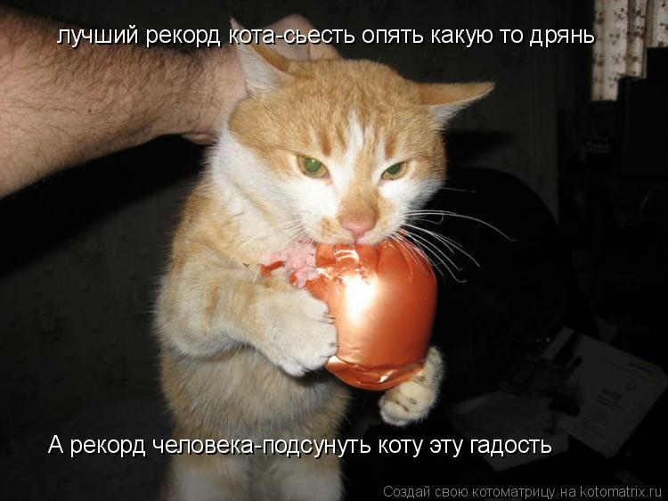 Котоматрица: лучший рекорд кота-сьесть опять какую то дрянь А рекорд человека-подсунуть коту эту гадость