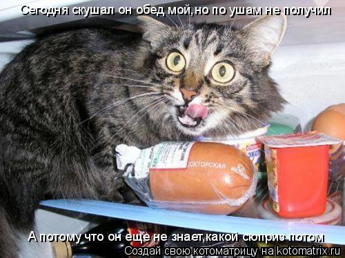 Котоматрица: Сегодня скушал он обед мой,но по ушам не получил А потому что он еще не знает,какой сюприз потом