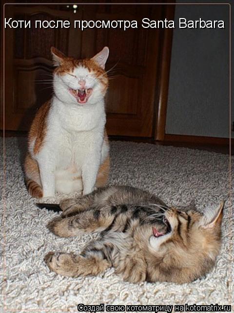 Котоматрица: Коти после просмотра Santa Barbara