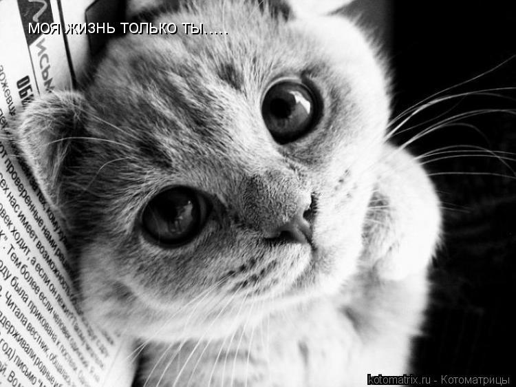Котоматрица: моя жизнь только ты.....