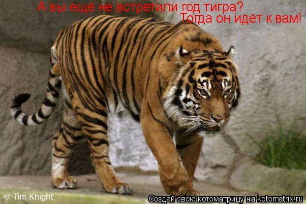 Котоматрица: А вы ещё не встретили год тигра?  Тогда он идёт к вам! А вы ещё не встретили год тигра?  Тогда он идёт к вам!