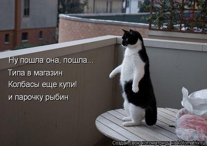 Котоматрица: Ну пошла она, пошла... Типа в магазин Колбасы еще купи! и парочку рыбин