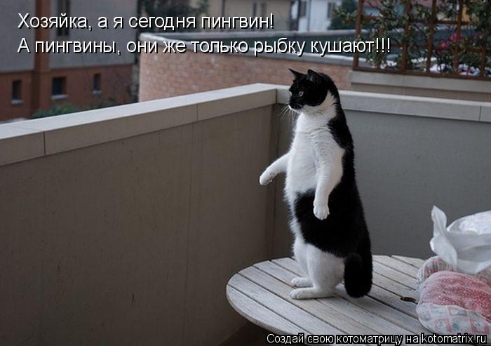 Котоматрица: Хозяйка, а я сегодня пингвин! А пингвины, они же только рыбку кушают!!!