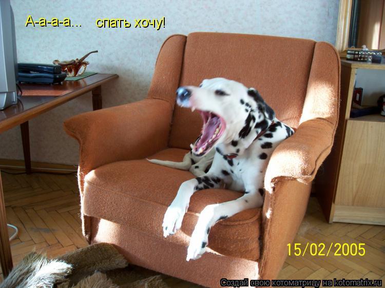 Котоматрица: А-а-а-а... спать хочу!