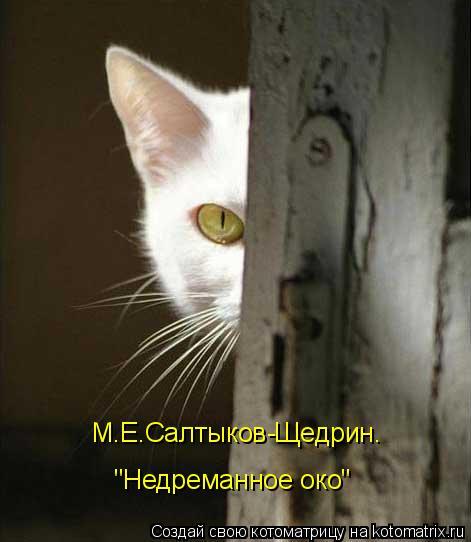 """Котоматрица: М.Е.Салтыков-Щедрин.  """"Недреманное око"""""""