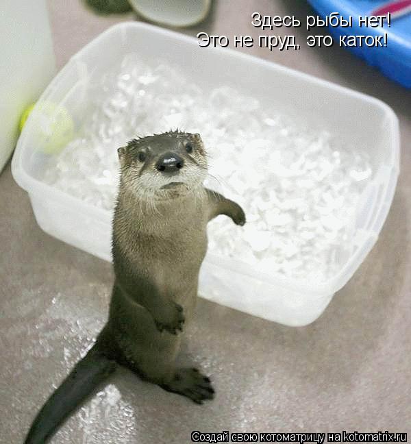 Котоматрица: Здесь рыбы нет! Это не пруд, это каток!