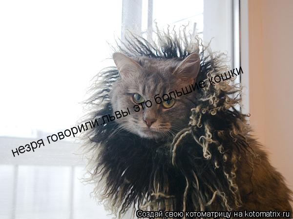 Котоматрица: незря говорили:львы это большие кошки