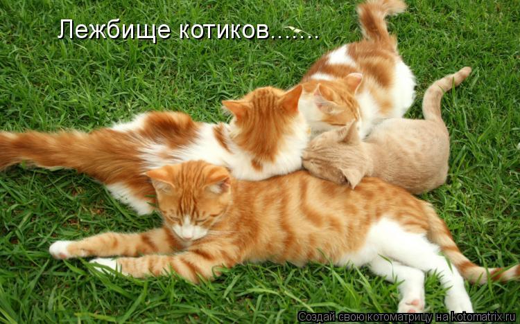 Котоматрица: Лежбище котиков.......