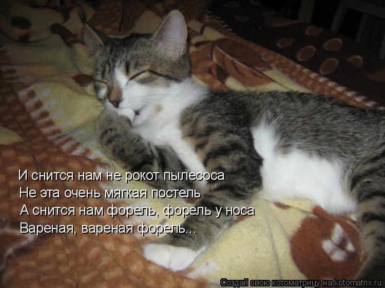 Котоматрица: И снится нам не рокот пылесоса Не эта очень мягкая постель А снится нам форель, форель у носа Вареная, вареная форель...