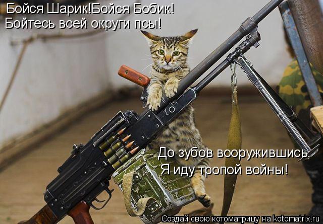 Котоматрица: Бойся Шарик!Бойся Бобик! Бойтесь всей округи псы! До зубов вооружившись, Я иду тропой войны!