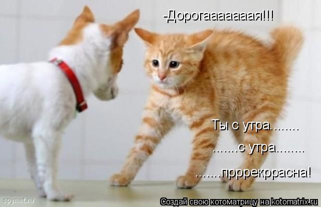 Котоматрица: -Дорогааааааая!!! Ты с утра........ .......с утра........ .......прррекррасна!
