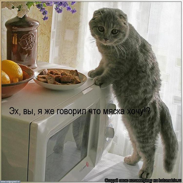Котоматрица: Эх, вы, я же говорил что мяска хочу!?