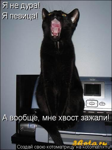 Котоматрица: Я не дура! Я певица! А вообще, мне хвост зажали!
