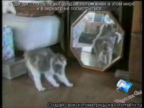 Котоматрица: да, да... понарожают уродов, потом живи в этом мире и в зеркало не посмотреться...