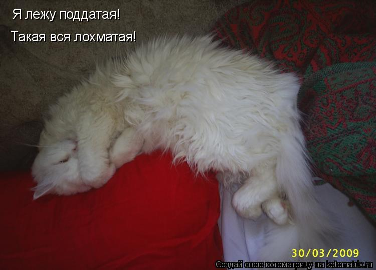 Котоматрица: Я лежу поддатая! Такая вся лохматая!