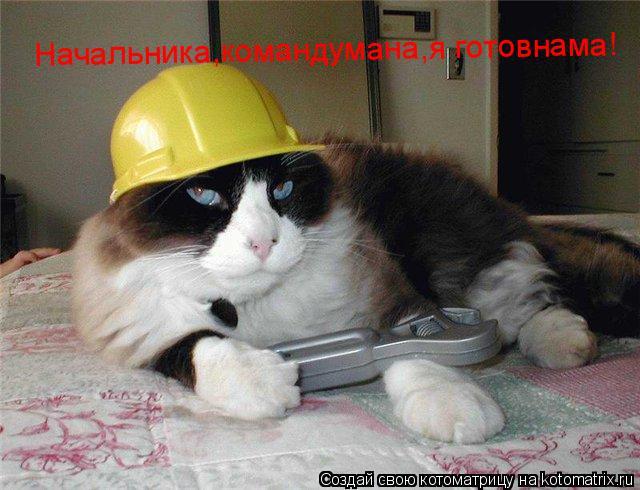 Котоматрица: Начальника,командумана,я готовнама!