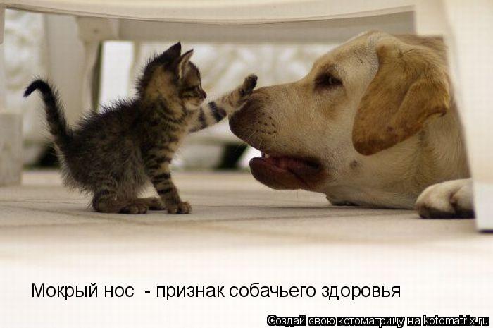 Котоматрица: Мокрый нос  - признак собачьего здоровья