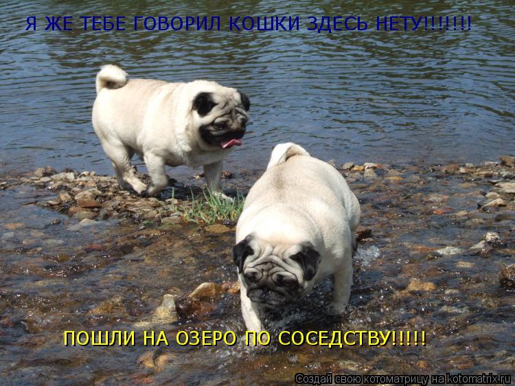 Котоматрица: Я ЖЕ ТЕБЕ ГОВОРИЛ КОШКИ ЗДЕСЬ НЕТУ!!!!!!! ПОШЛИ НА ОЗЕРО ПО СОСЕДСТВУ!!!!!