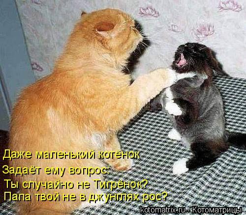 Котоматрица: Ты случайно не Тигрёнок? Папа твой не в джунглях рос? Даже маленький котёнок Задаёт ему вопрос: