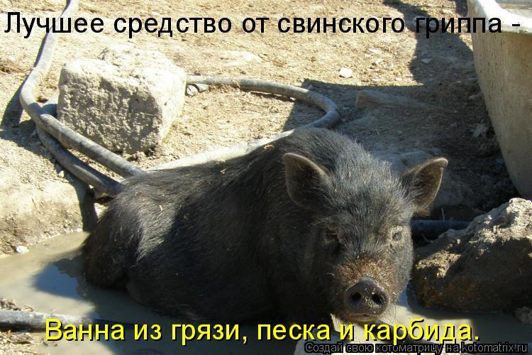 Котоматрица: Лучшее средство от свинского гриппа - Ванна из грязи, песка и карбида.