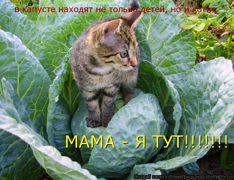 Котоматрица: в капусте находят не только детей, но и котят,  МАМА - Я ТУТ!!!!!!!