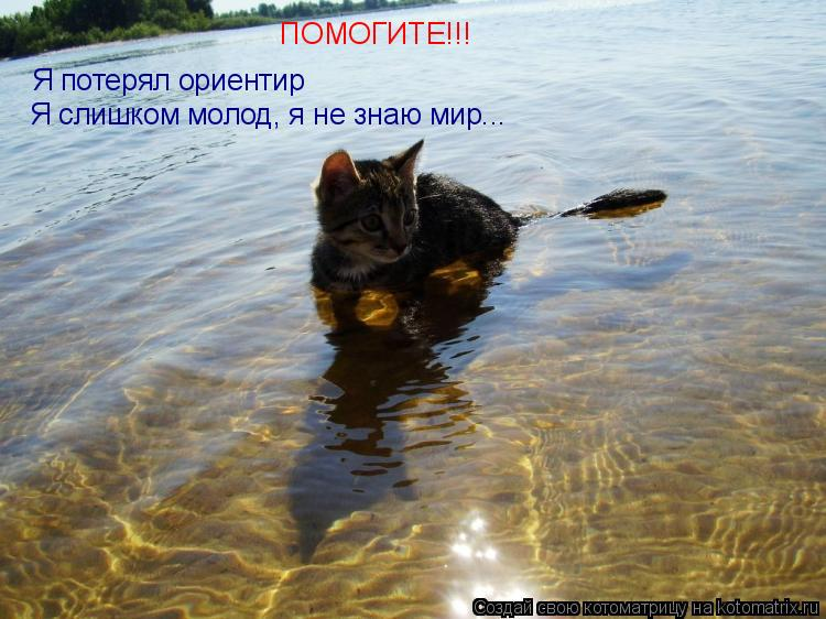 Котоматрица: Я потерял ориентир ПОМОГИТЕ!!! Я слишком молод, я не знаю мир...