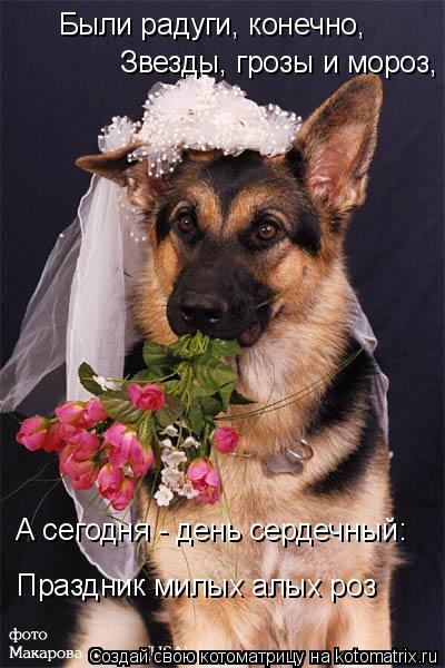 Котоматрица: Были радуги, конечно,    Звезды, грозы и мороз,  А сегодня - день сердечный: Праздник милых алых роз